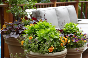 Simple Patio with Plants