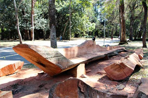 Fallen Trees for Furniture