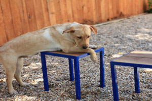 Dog with Super-Modern Stools